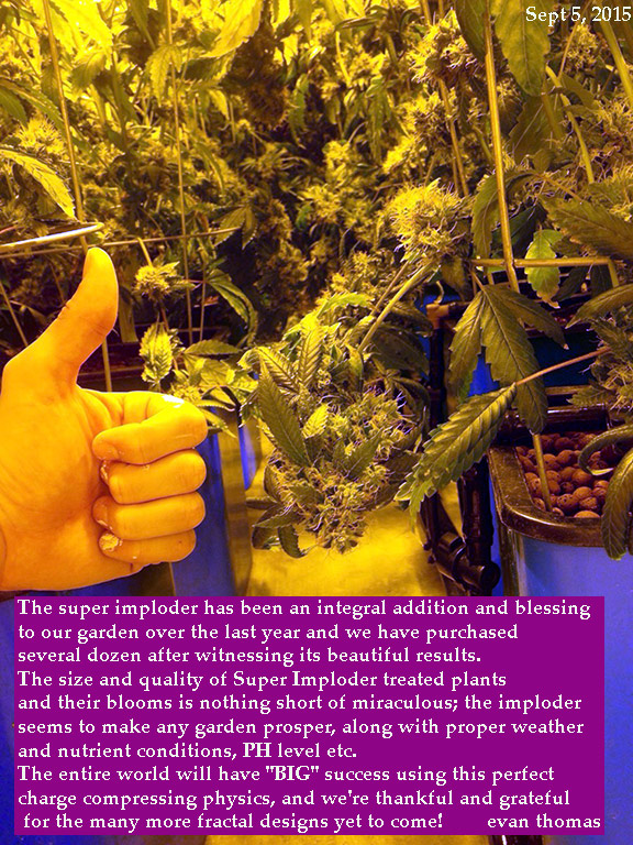 Super Imploder treated plants is nothing short of miraculous